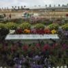 カールスバッドの花畑