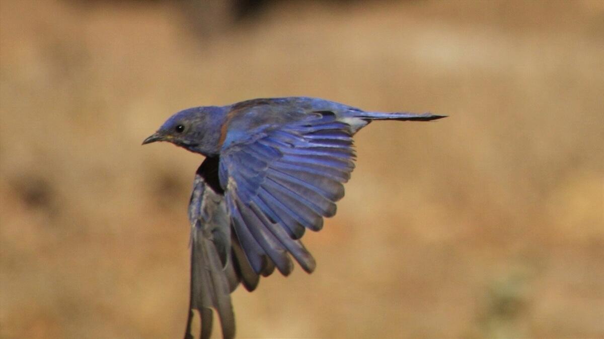 青い羽の鳥(名前不明)